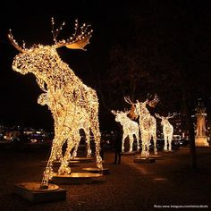 head to nybrokajen stockholm to see these beautiful christmas moose