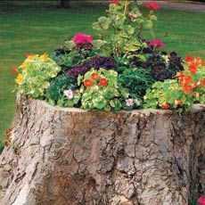 HOW TO CREATE A TREE-STUMP PLANTER Felling   a tree is usually an expensive necessity that becomes even pricier when you have   to remove the stump that the landscaper leaves behind. Instead of grinding it   down, turn the stump into a focal point by filling it with   flowers.