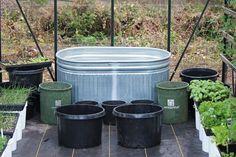 mavis how to grow food in a greenhouse