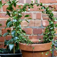 made with love: potted topiary | Design*Sponge