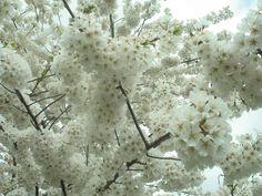 Gotta Love Spring!