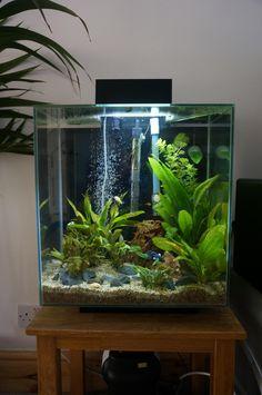Aquarium Source by bmesut Tropical Fish Aquarium, Tropical Fish Tanks, Aquarium Fish Tank, Paludarium, Vivarium, Aquarium Landscape, Nature Aquarium, Fish Tank Themes, Fish Tank Terrarium