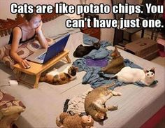 ''Cats are like potato chips. You can't have just one.'' Dump A Day Attack Of The Funny Animals - 23 Pics