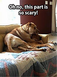 Dog Refusing To Bathe Dogs Pinterest Dog Animal And Funny - 21 hilarious dog moments