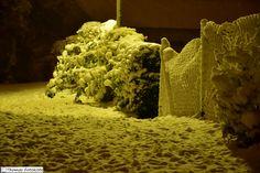 er ist angekommen  #Winter #Schnee #WeißerNorden