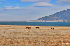 Отдых в Казахстане | Travel Kazakhstan http://bptrip.ru/posts/kazahstan-dostoprimechatelnosti-foto-viza-transport-marshrut-puteshestviya/
