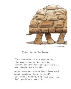 Are you thinking of buying a tortoise to keep? If so there are some important things to consider. Tortoise pet care takes some planning if you want to be. Tortoise As Pets, Red Footed Tortoise, Tortoise House, Tortoise Habitat, Tortoise Table, Sulcata Tortoise, Giant Tortoise, Turtle Quotes, Turtle Time
