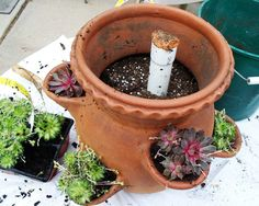 Tips for planting a succulent strawberry jar