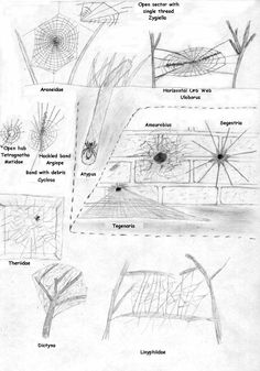 Spider identification location chart