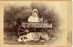 jouets d'enfants, jeux de photographes : Portrait d'enfant avec des chiens (Carlins ou Pugs...