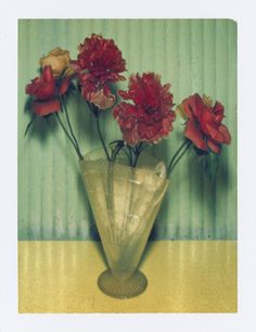 Albert Watson | Mexican Flowers 1996