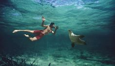 Swimming with Sea Lions, Baird Bay, South Australia. Get up and personal with totally wild and curious Sea Lions for an incredible experience of a lifetime. They are the most rarest of seal species in Australia.