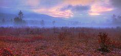 Cranberry Glades, Pocahontas County, WV