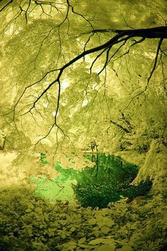Koganei Park Pond, Japan