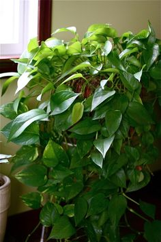 One potted plant per 100 sq ft. will clean the air in an average home or office