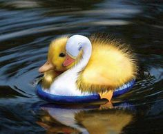 ducky on an inflatable - baby ducks warm my heart Cute Baby Animals, Animals And Pets, Funny Animals, Cute Creatures, Beautiful Creatures, Beautiful Birds, Animals Beautiful, Animal Pictures, Cute Pictures