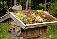 Sempervivum und Sedum auf dem Wildbienenhaus Mehr