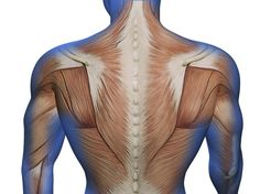 Hogyan és hol alakulnak ki az izomcsomók? #masszazs #massage #izom #izomcsomok #anatomia Back Pain, Tribal Tattoos, Stock Photos, Blog, Exercises, Blogging
