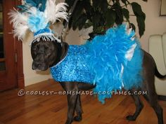Copacabana Showgirl Costume for a Dog... Coolest Halloween Costume Contest