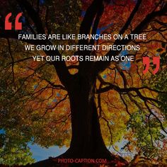 ''Families are like branches on a tree we grow in different directions, Yet our roots remain as one.'' Check out the link in the bio for more family captions #Family #love #fun #friends #happy #kids #life #sister #baby #parenting #children #brother #me #moms #dads #mums #MommyMonday #motherhood #momlife #quote #quotes #quotegram #quoteoftheday #caption #captions #photocaption #FF #instafollow #l4l #tagforlikes #followback