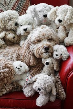 Will the real dog please stand up !