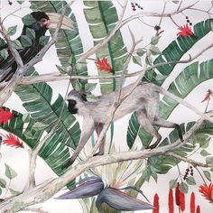 A section of a large watercolour I did last year. Working on one double the size of this one at the moment.  #illustration #winsorandnewton #durban #southafricanart #vervetmonkey #botanicalwatercolor #botanicalillustration #hornbill