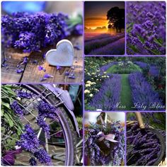 Collage by Miss Lily Bliss Lavender Decor, Lavender Cottage, Lavender Garden, Lavender Blue, Lavender Fields, Purple Love, All Things Purple, Shades Of Purple, Purple Flowers