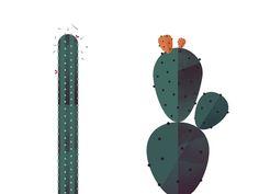 Cactus by Maya Stepien