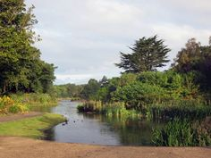 The East Lake at Stanley Park in Liverpool, England, provides habitat for local wildfowl. Liverpool England, Stanley Park, Family Roots, Habitats, Europe, River, London, Outdoor, Scenery