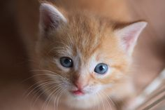 A kitten was found starved, anemic and dying after being abandoned in a…
