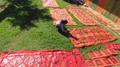 Wax drying in the Swaziland sunshine