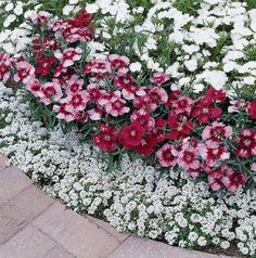 flower garden care Flower Garden With Dianthus Plants Brick Flower Bed, Beautiful Gardens, Beautiful Flowers, White Flowers, Dianthus Flowers, Hydrangea Colors, Flower Landscape, Front Yard Landscaping, Small Gardens