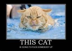 Breaking News - Grumpy cat swims to kill I Love Cats, Crazy Cats, Cute Cats, Funny Cats In Water, Animal Pictures, Funny Pictures, Funny Images, Funny Pics, Funny Stuff