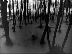 The Forests Of Ivan's Childhood (1962) – Andrei Tarkovsky. | Celluloid Wicker Man