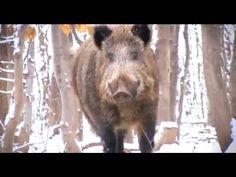 Cazavisión TV, el canal de los cazadores