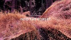 'Into the Forest' is the first of three films exploring the making of 'In the Eyes of the Animal' - a virtual reality and 360 experience created by Marshmallow Laser Feast. 'Into the Forest' introduces the rich context, background and inspiration for the work - the forest.   An online version of the work is available at www.iteota.com