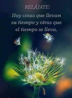 Best Quotes, Love Quotes, Trying To Be Happy, Love Handle Workout, Spiritual Messages, More Than Words, Spanish Quotes, Beautiful Words, Beautiful Flowers