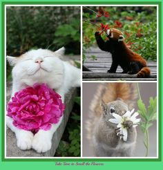 Spring Time; Take Time to Smell the Flowers