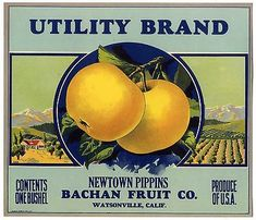 Wholesale Lot of 100 Old Vintage PREMIUM PEAR LABELS Bachan Fruit Watsonville CA
