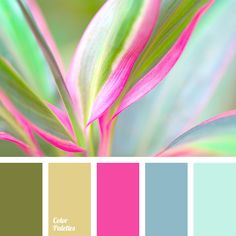 Blue Color Bright Pink Palette Green House Scheme