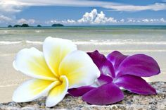 Plumeria and Orchid, my two favorite flowers - on the beach...
