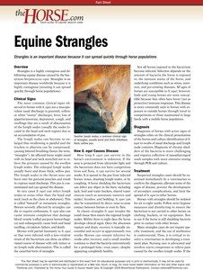 The Horse | Strangles | TheHorse.com