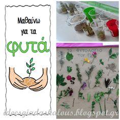 Ιδεες για δασκαλους: Φακές, φασόλια και το φυτολόγιο της τάξης!