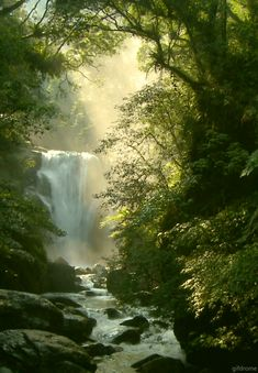 Sunbeams are streaking through the trees on the beautiful waterfall cascading down into the lush forest!