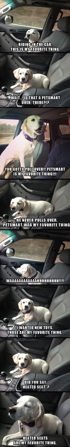 Dog is my co-pilot  - funny pictures