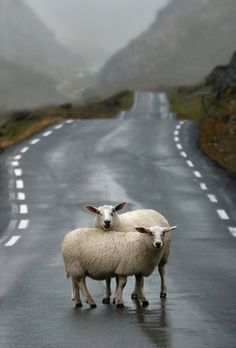 Standing in the middle of the road !!
