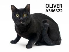 Adopted! Oliver has found his forever home. 3/14/15