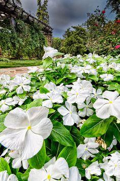 Fort Worth Botanical Gardens, Texas