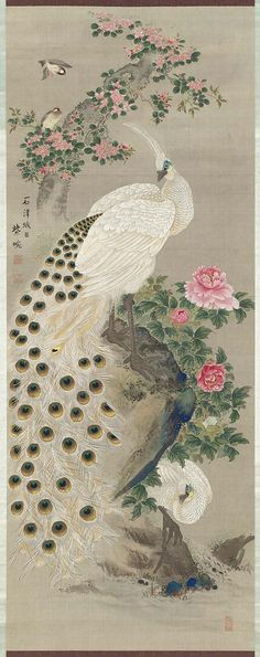 Museum of Fine Arts, Boston-Peafowl and Flowers 牡丹孔雀図(双幅) Miura Shien (Japanese) Japanese Edo period Peacock Drawing, Peacock Painting, Peacock Art, Chinese Prints, Chinese Art, Oriental Flowers, White Peacock, Peafowl, Vintage Fairies