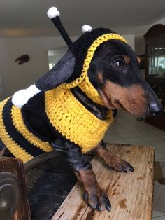 Bumble bee your doxie with this dog custome. Just perfect for your October walk with your kids in the neighborhood. This bumble bee is out of the woods and perfect for a warm soft sweater that will create AH moments all over. Hand made to fit just perfect, one stitch of love at a time. This easy to wear sweater is the perfect fit. All our yarns are wash and dry type to make it even easier for you to put them in the washing machine. The color selection is up to you. Sweaters are made to the…